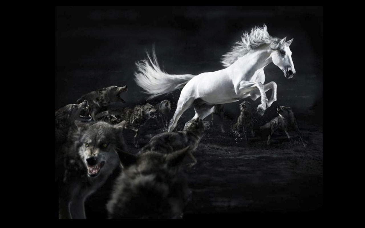 3d horse wallpaper,horse,black and white,monochrome photography,darkness,fictional character
