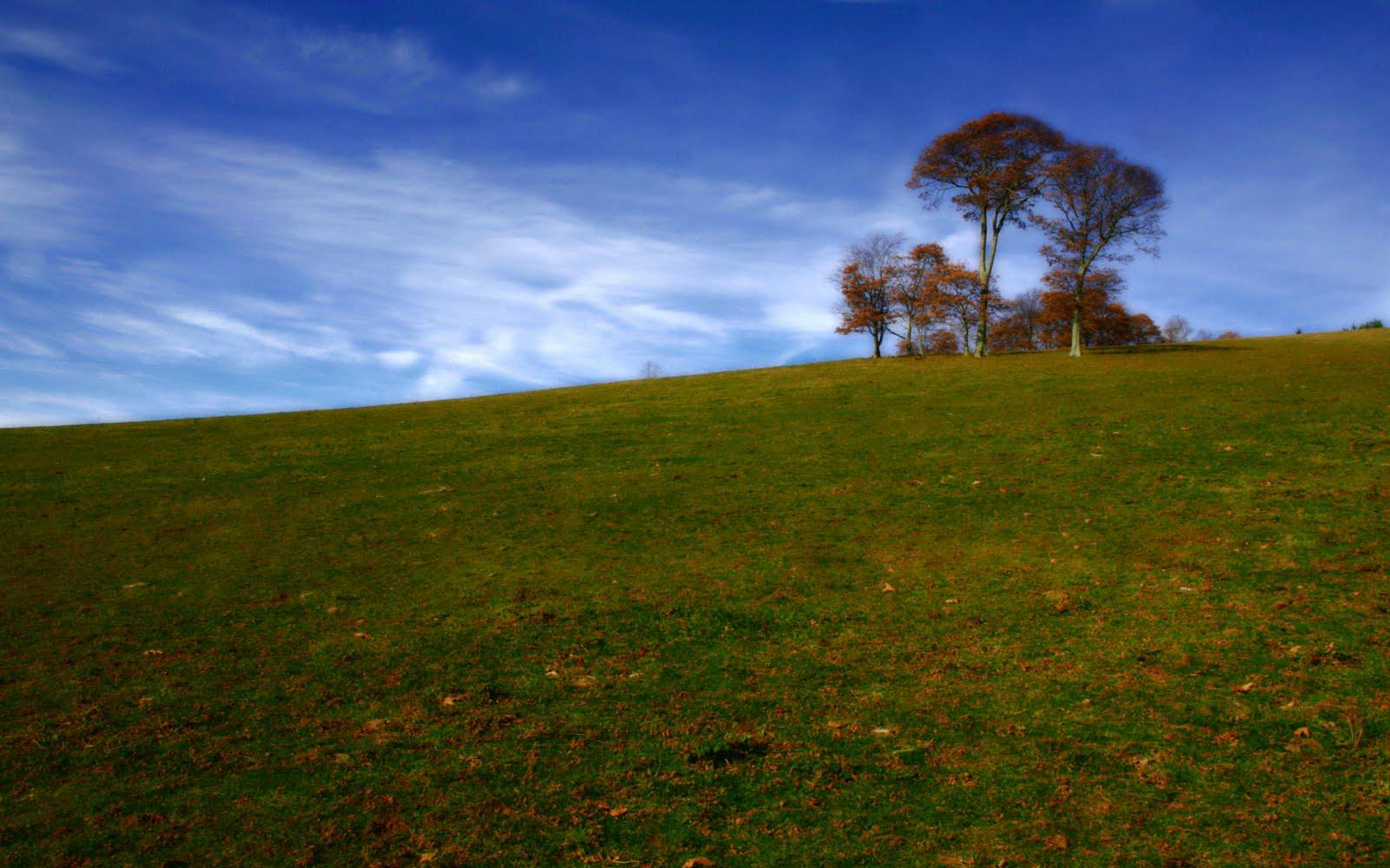 indian nature wallpaper,sky,nature,grassland,natural landscape,green