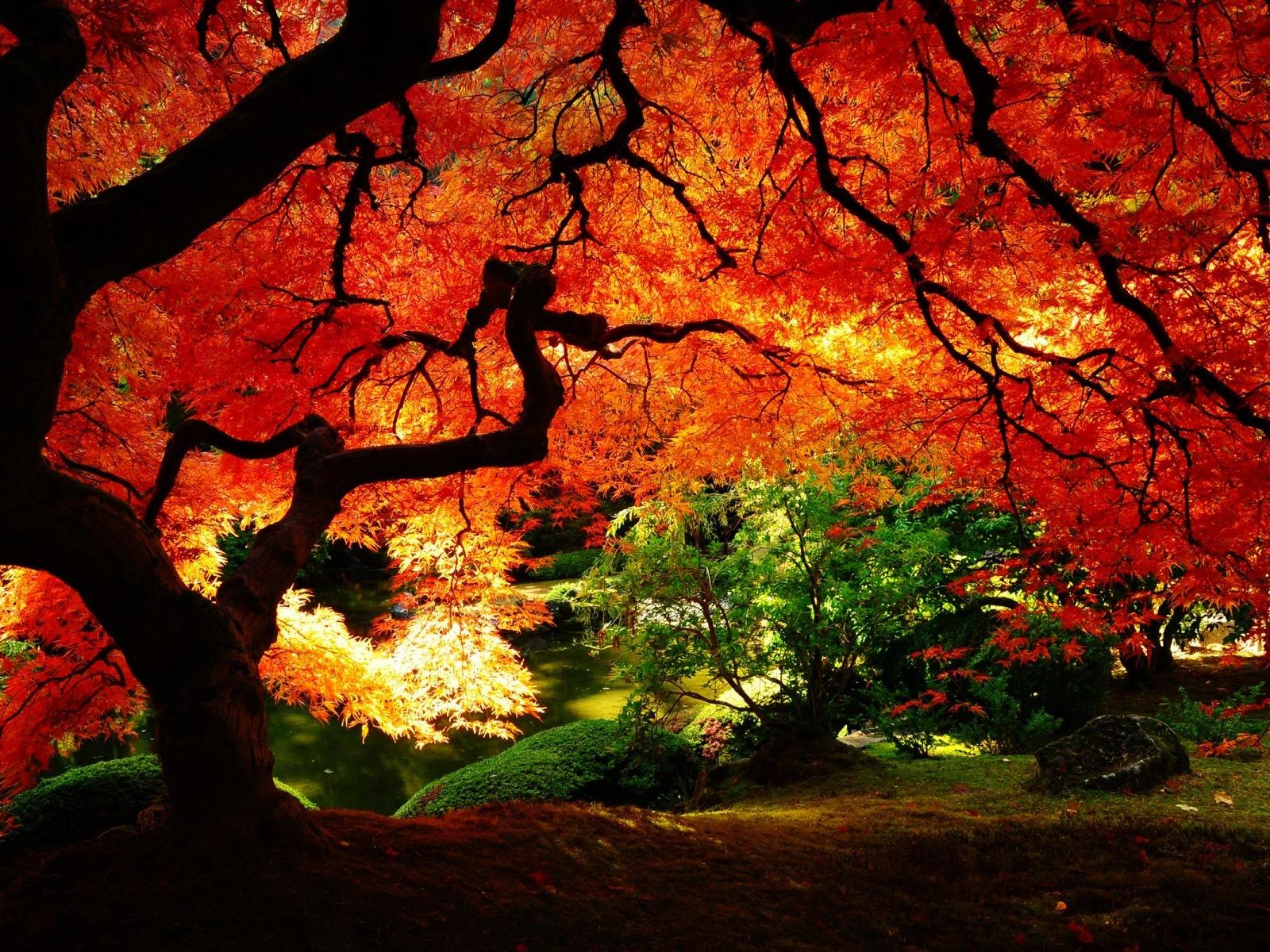 tree leaves wallpaper,tree,natural landscape,nature,red,leaf