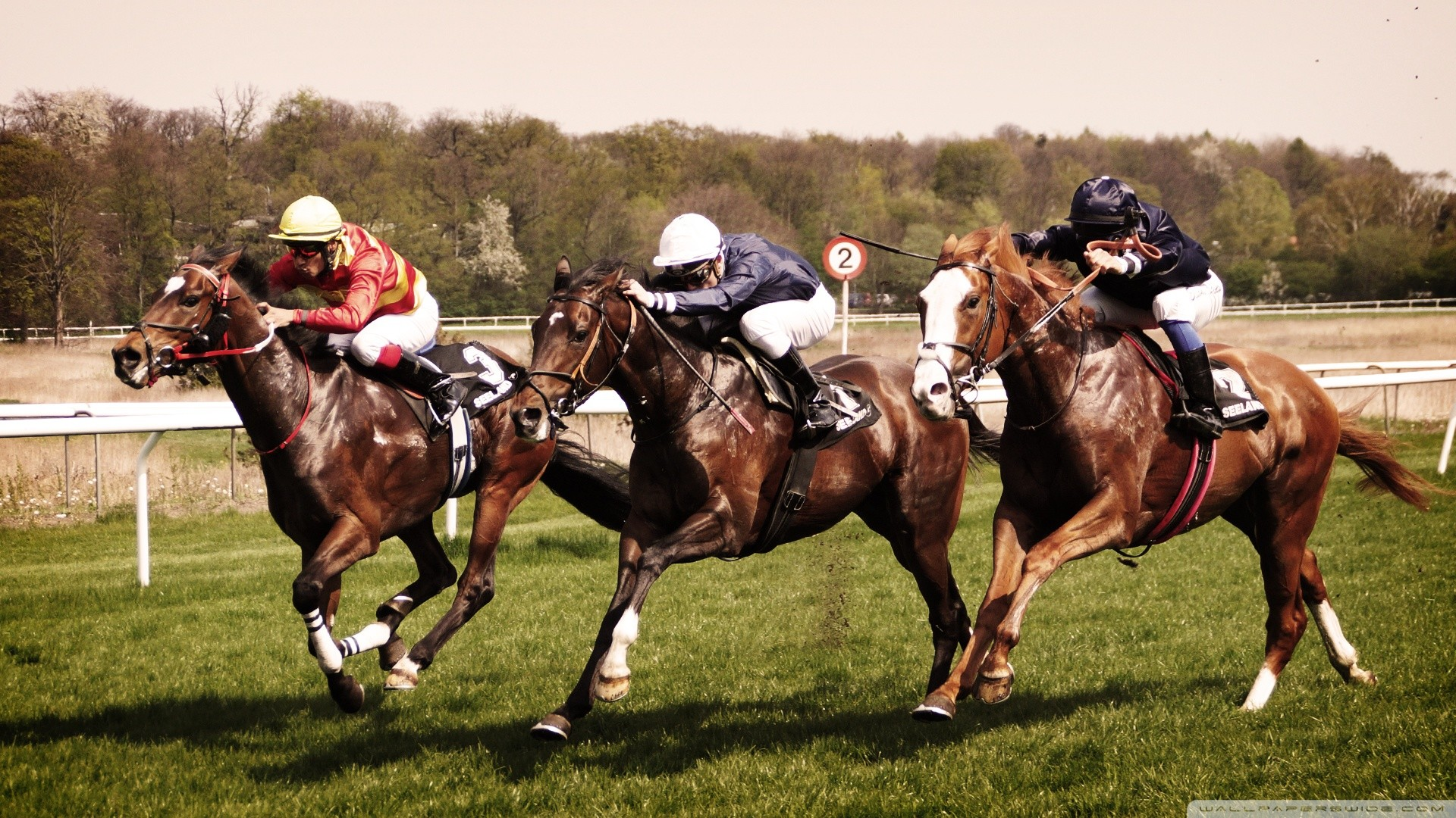 horse racing wallpaper,horse,animal sports,sports,bridle,rein