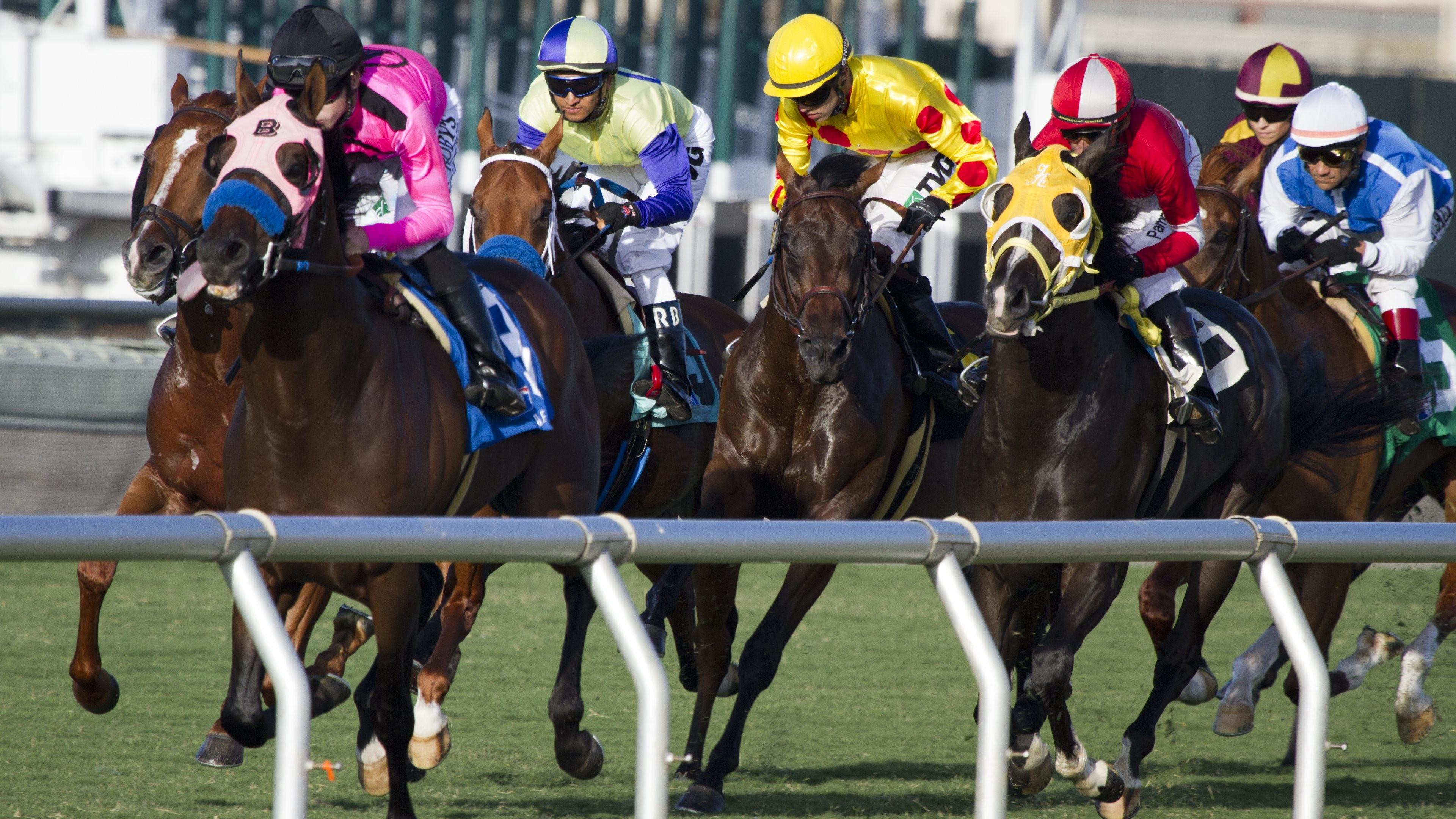 horse racing wallpaper,horse,sports,vertebrate,bridle,mammal