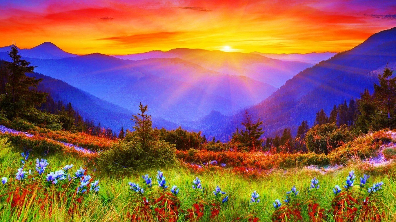 1366 x 768 resolution wallpaper,natural landscape,nature,wildflower,meadow,sky