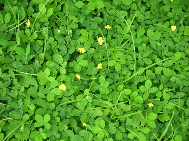 eye friendly wallpaper,green,plant,flower,groundcover,grass