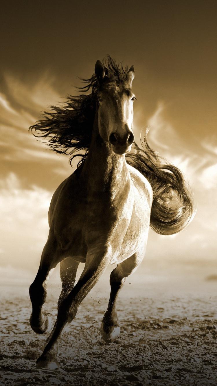 running wallpaper iphone,horse,mustang horse,stallion,mane,sky