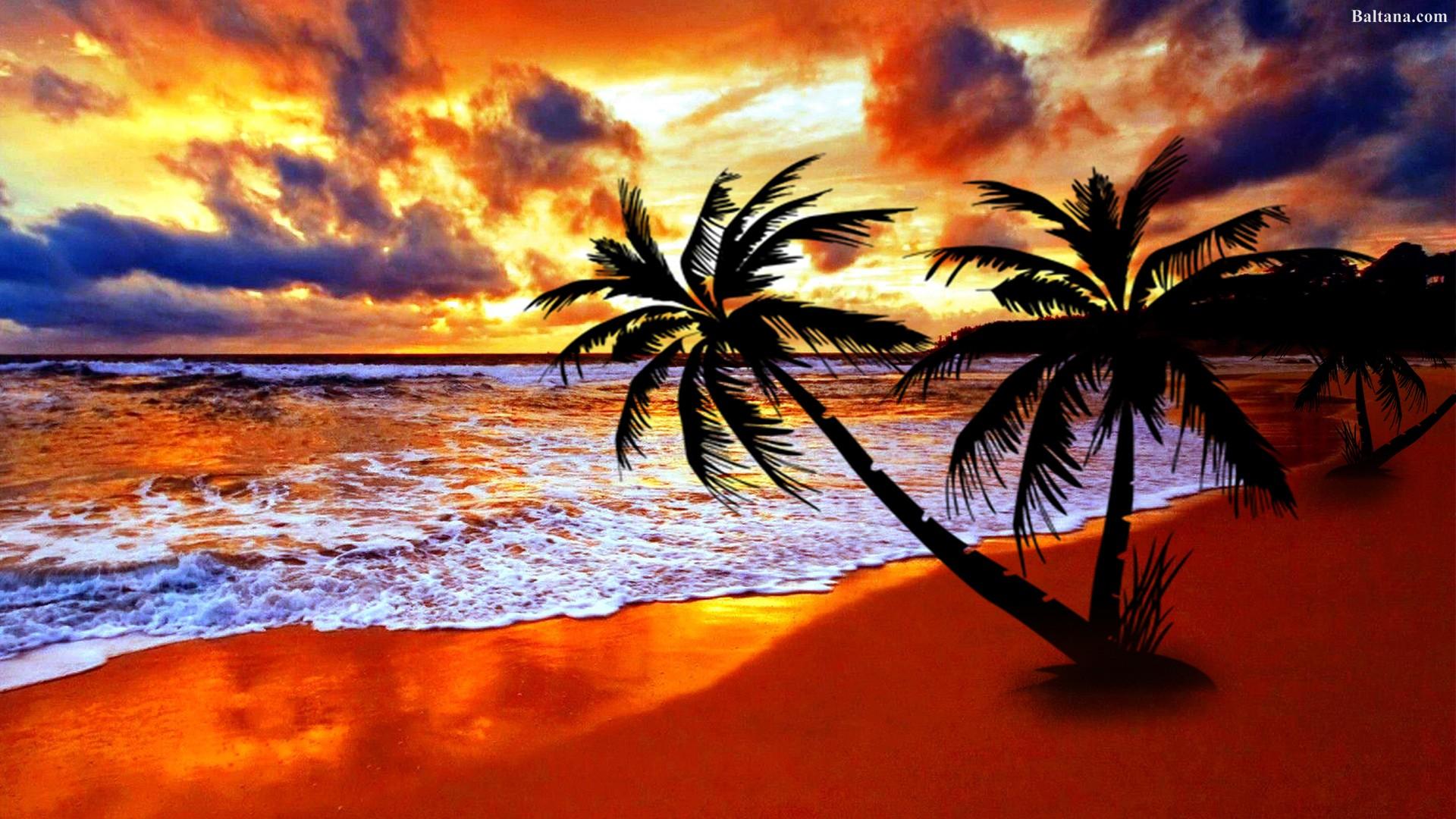 palm tree wallpaper,sky,nature,tropics,sunset,tree