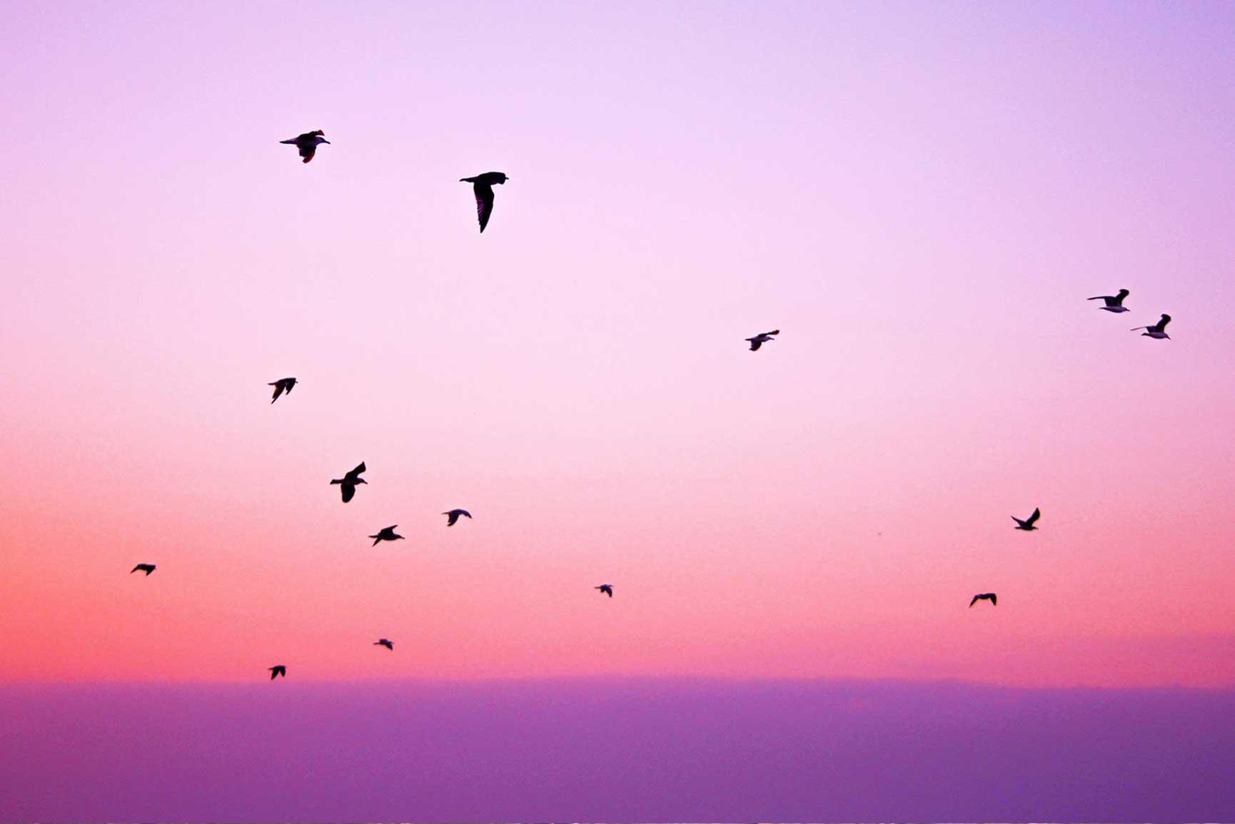 sunset wallpaper,sky,pink,purple,bird,morning