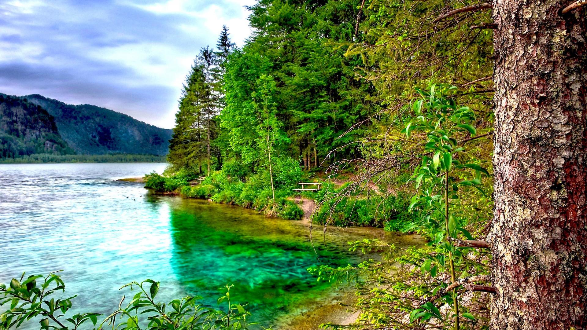 forest desktop wallpaper,natural landscape,nature,body of water,water,nature reserve
