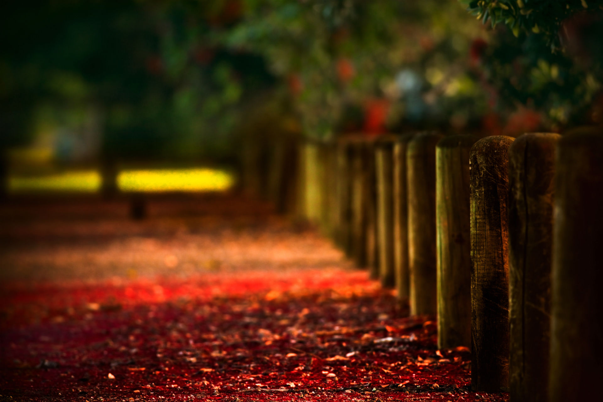 photography wallpaper backgrounds,red,nature,leaf,green,light