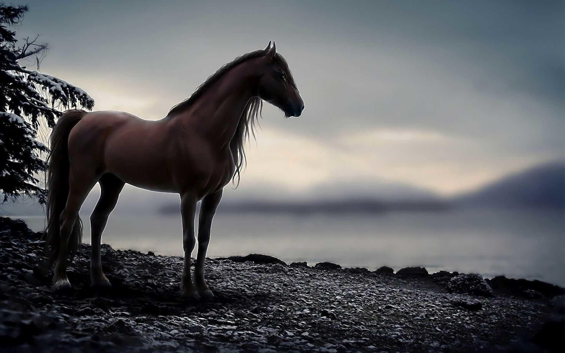 horse wallpaper,horse,mammal,sky,mane,stallion