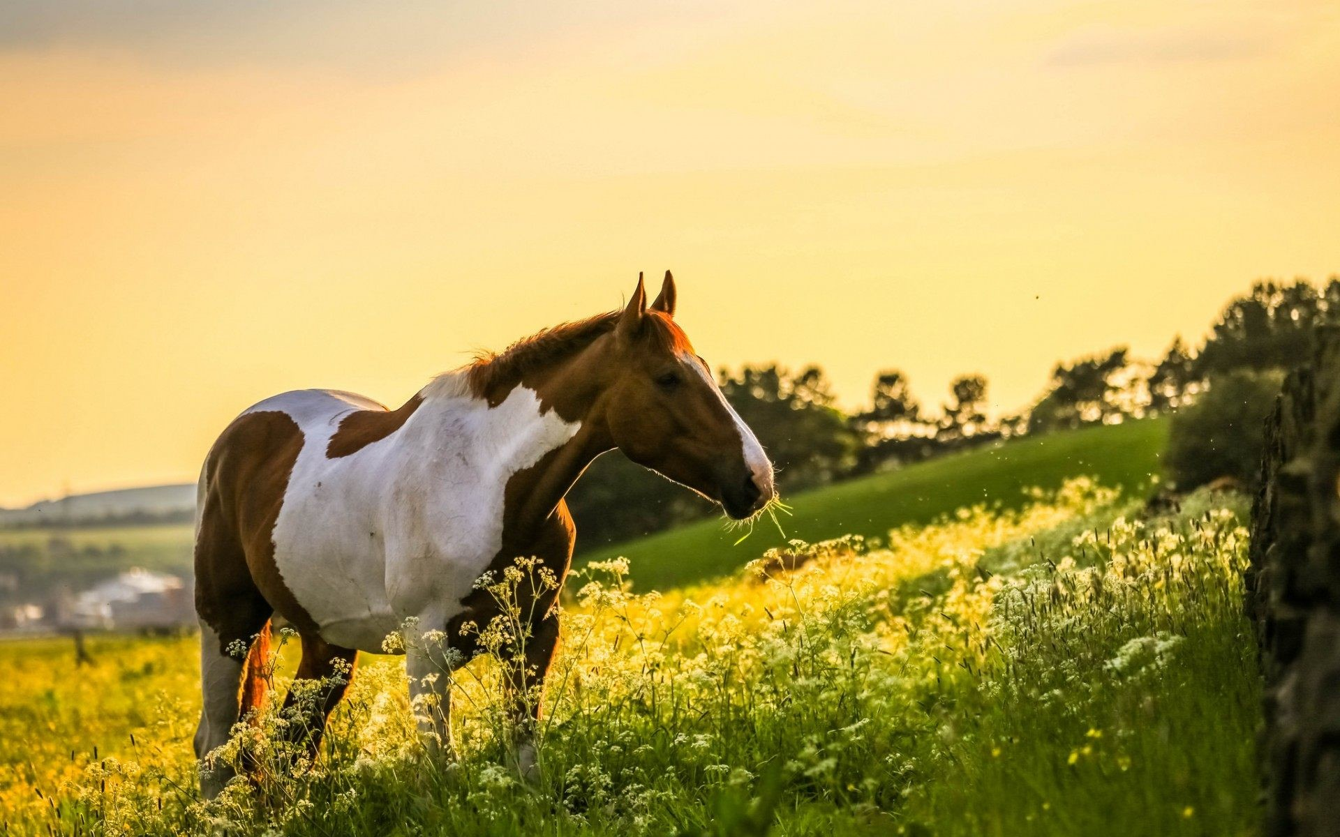 horse wallpaper,horse,people in nature,pasture,mustang horse,grassland