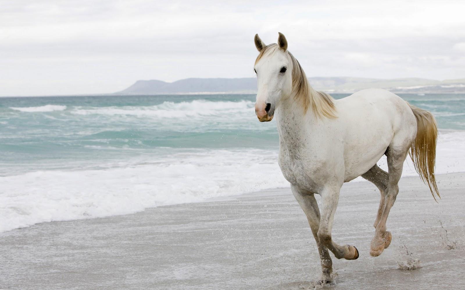 horse wallpaper,horse,mane,stallion,mustang horse,sky