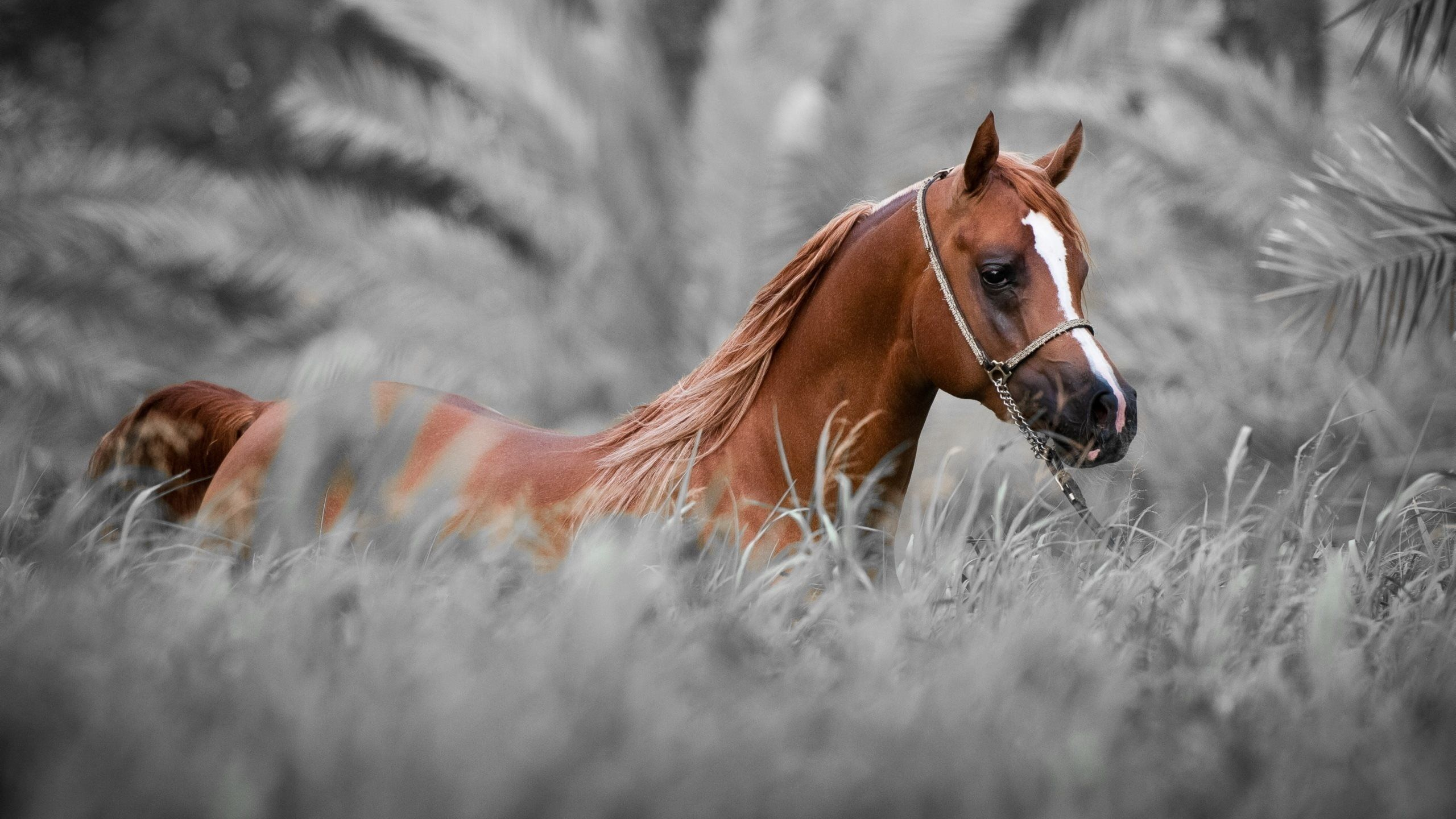 horse wallpaper,horse,mammal,vertebrate,mustang horse,mane