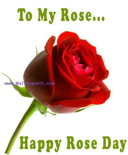 happy rose day wallpaper,red,garden roses,rose,flower,rose family
