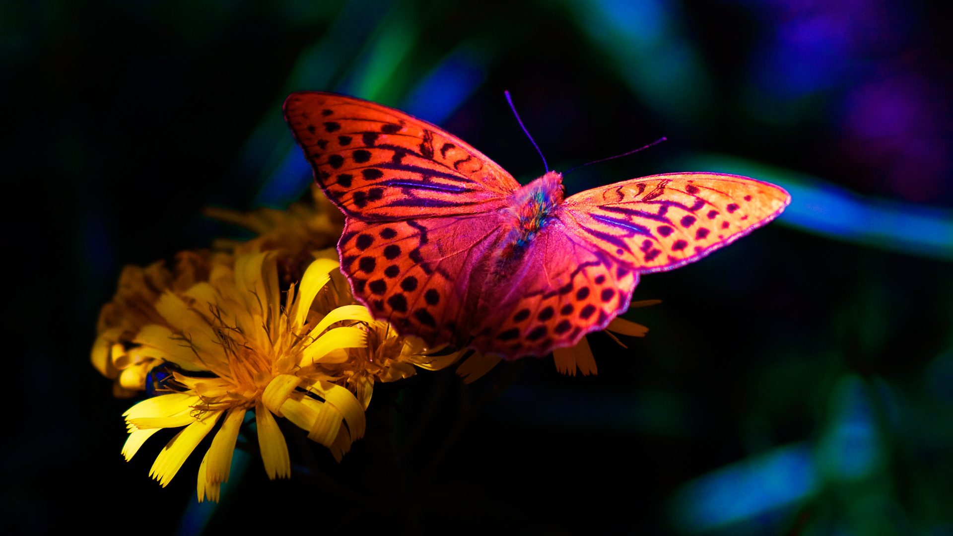 desktop wallpaper hd 3d full screen free download,moths and butterflies,butterfly,cynthia (subgenus),insect,invertebrate