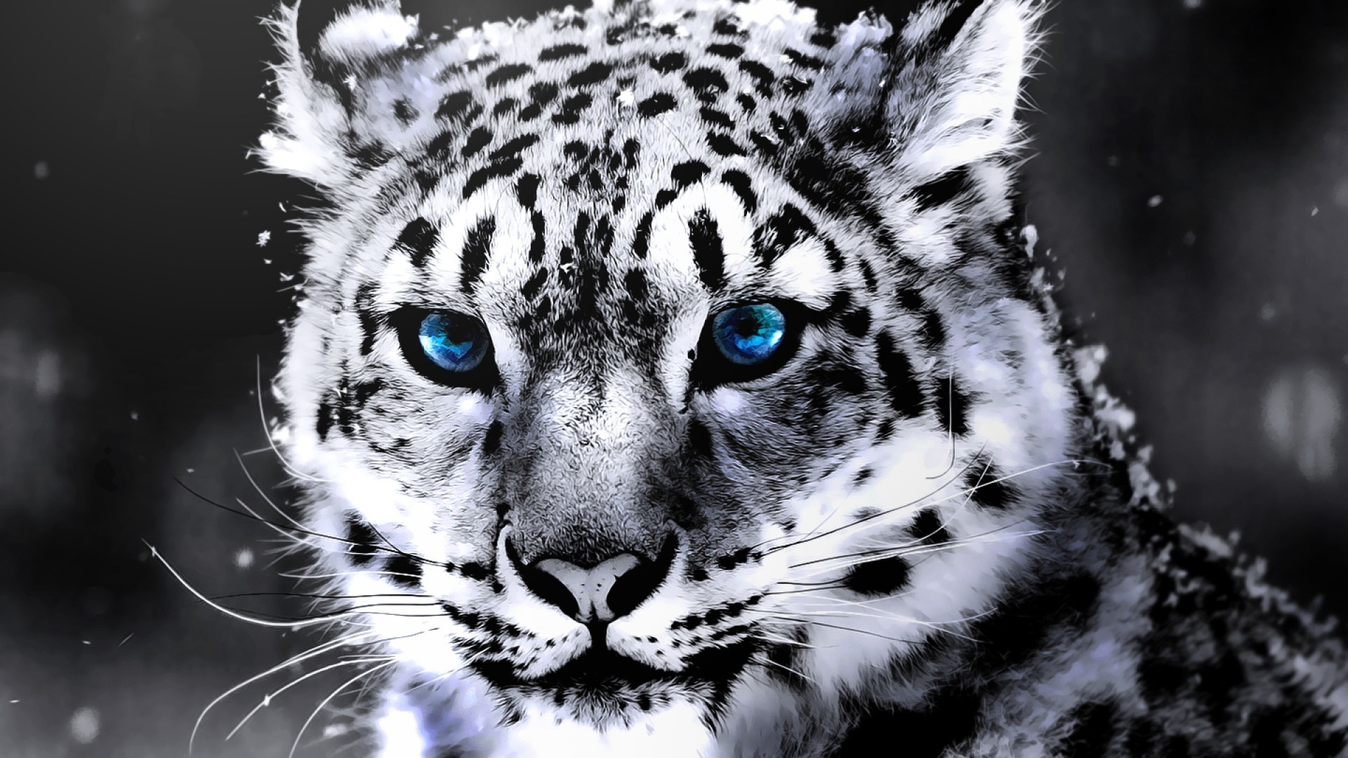white tiger hd wallpapers 1080p,mammal,vertebrate,snow leopard,whiskers,wildlife