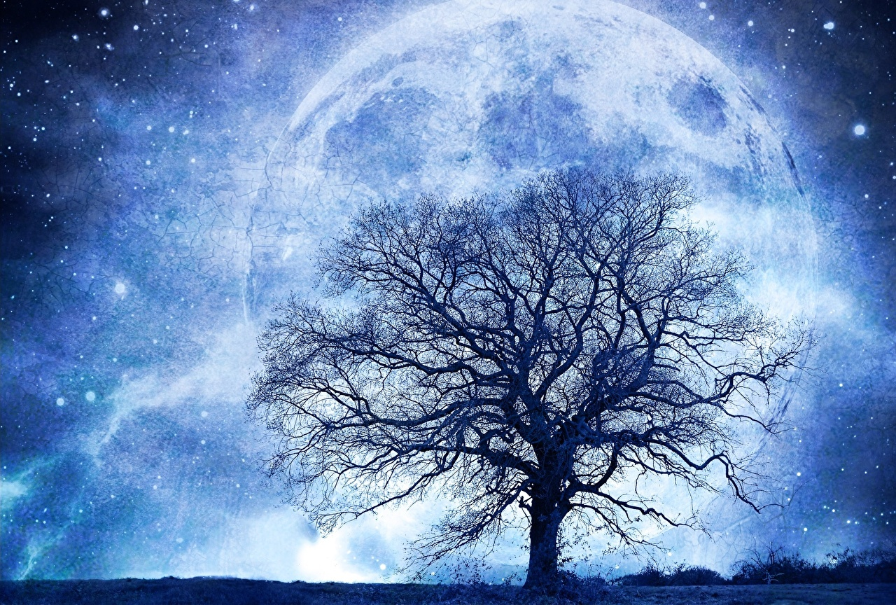 trees and stars wallpaper,sky,nature,natural landscape,atmosphere,tree