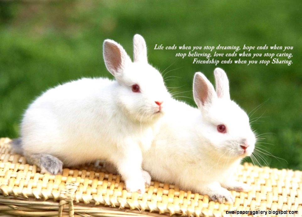 beautiful wallpapers of friendship love,rabbit,vertebrate,domestic rabbit,rabbits and hares,mammal