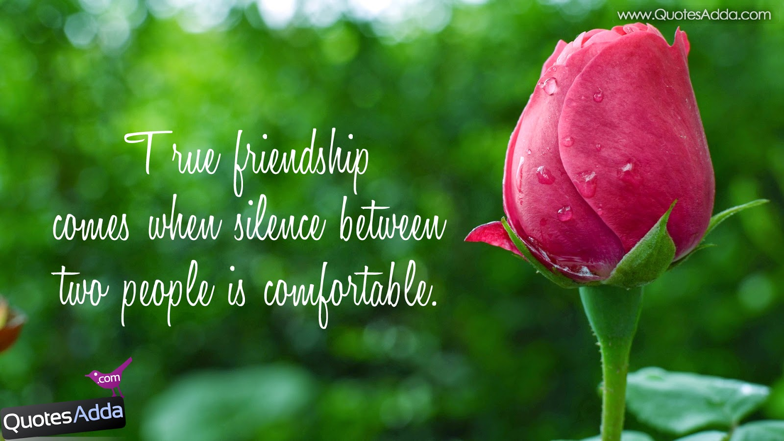 good friends wallpaper,flower,bud,pink,petal,plant