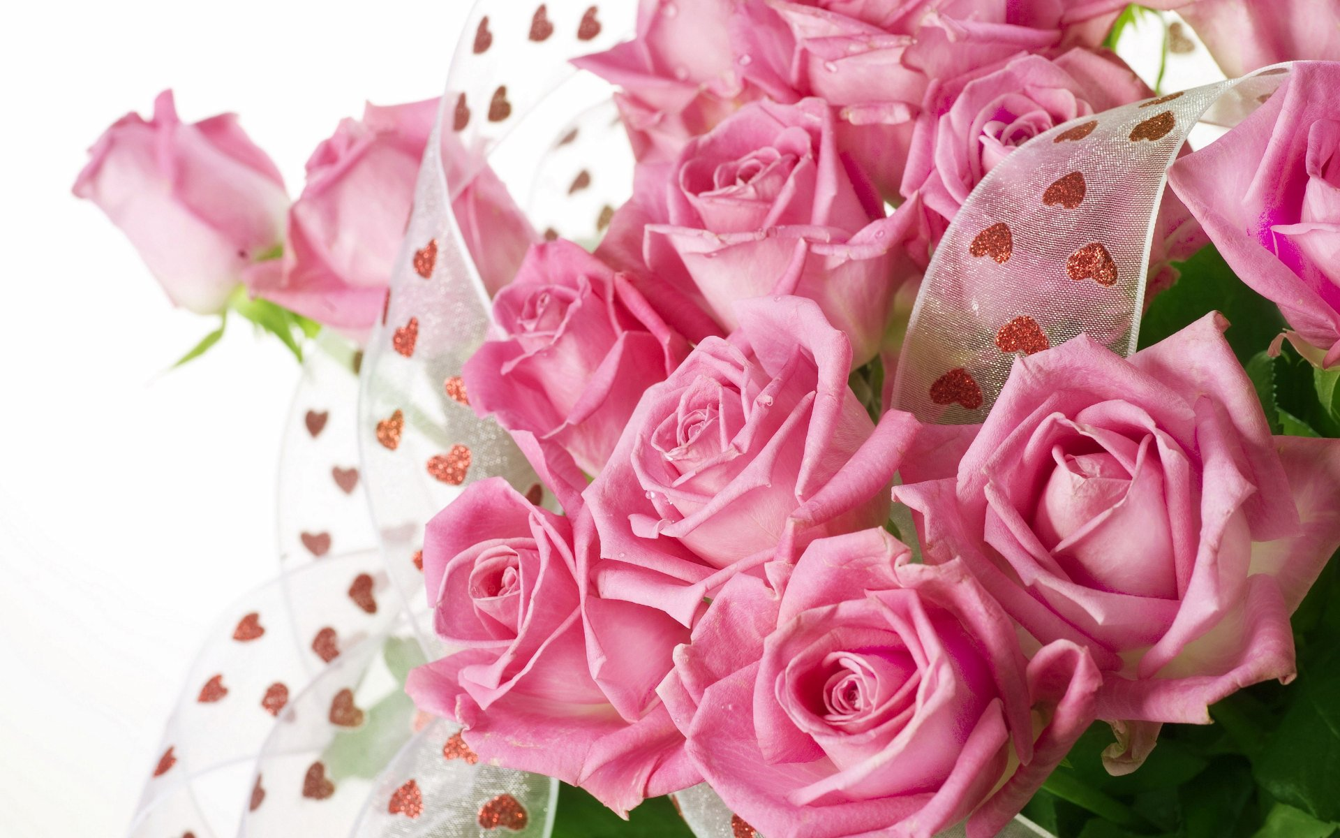 beautiful pictures of roses for wallpaper,flower,garden roses,flowering plant,rose,pink