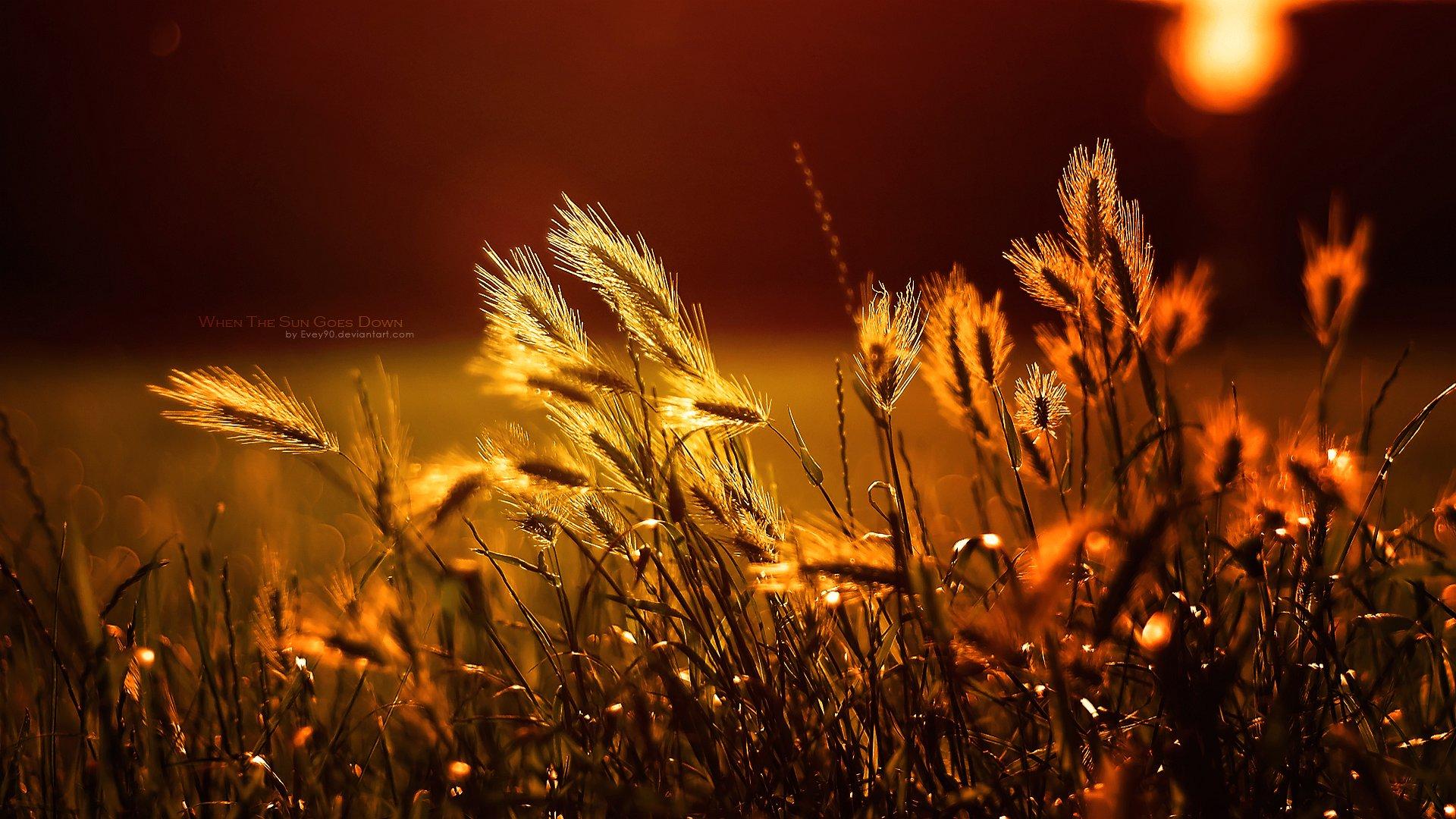 retina display wallpapers,nature,sky,grass,light,heat