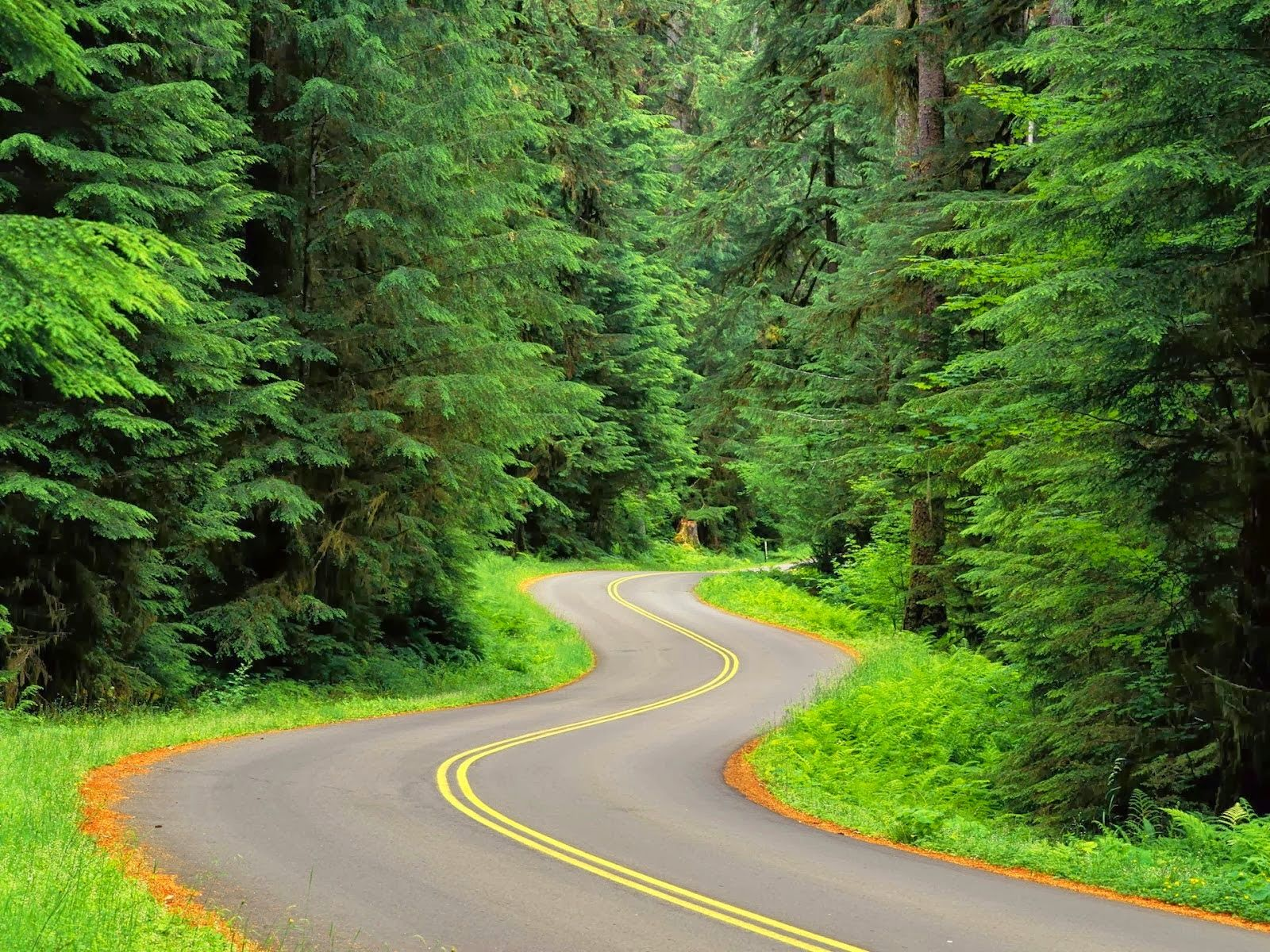 beautiful nature hd wallpapers full,green,natural landscape,road,tree,vegetation