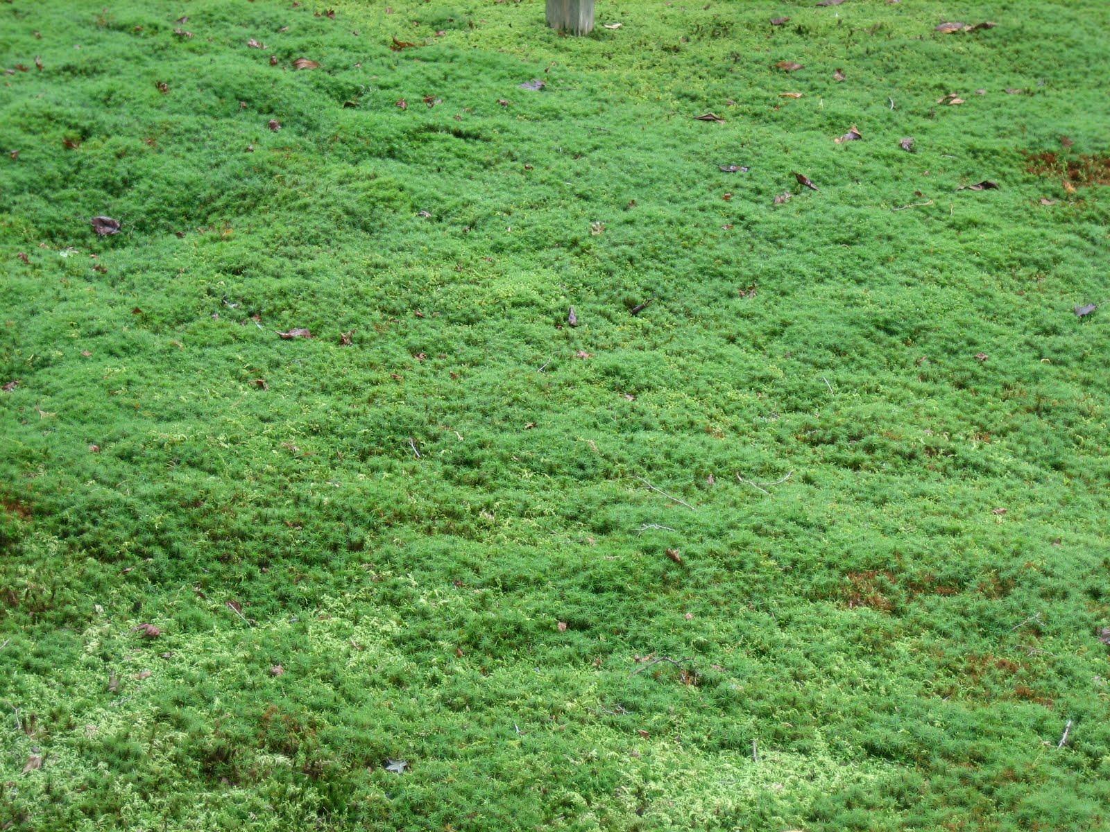 wallpaper good for eyes,green,lawn,grass,vegetation,groundcover
