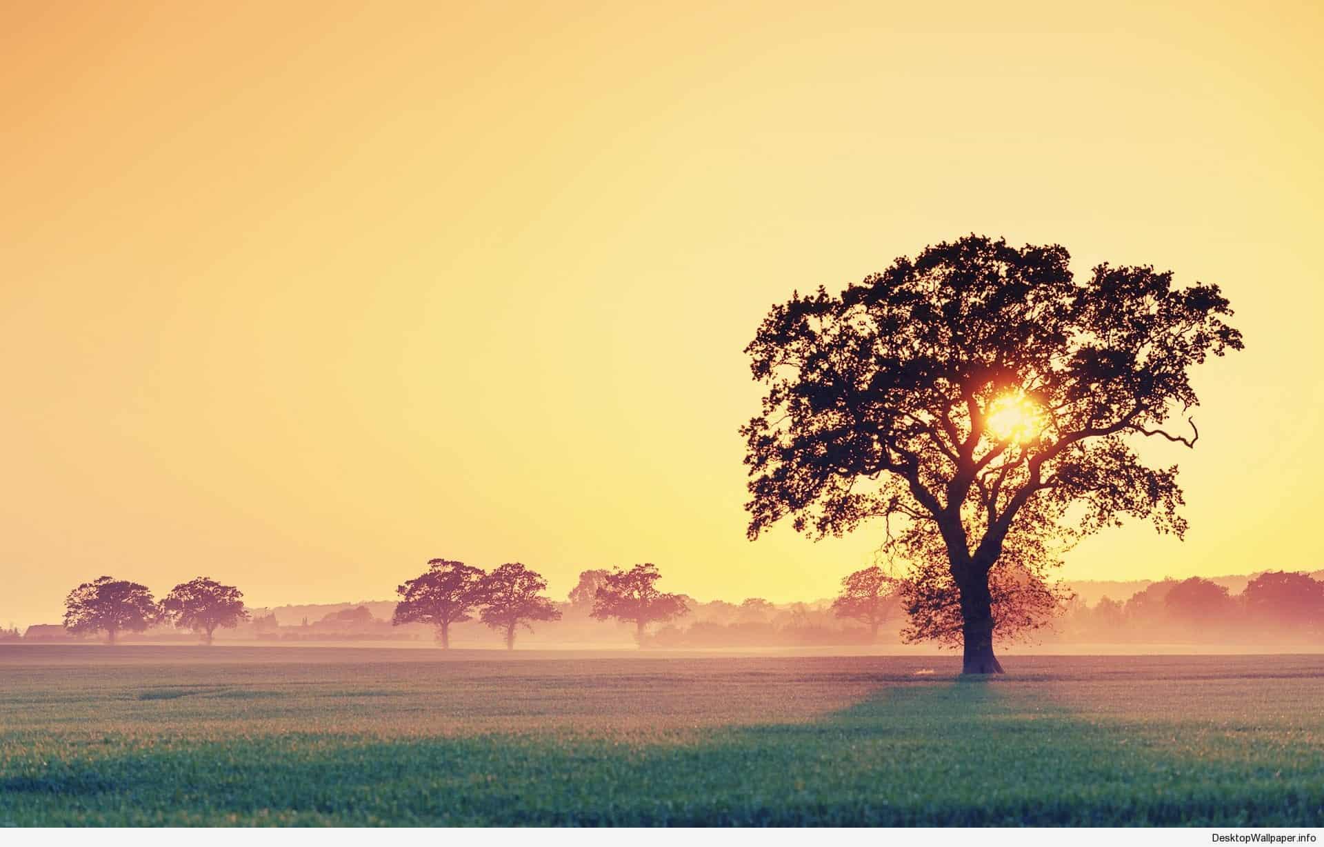 windows 10 wallpaper hd 3d for desktop,natural landscape,sky,nature,tree,morning