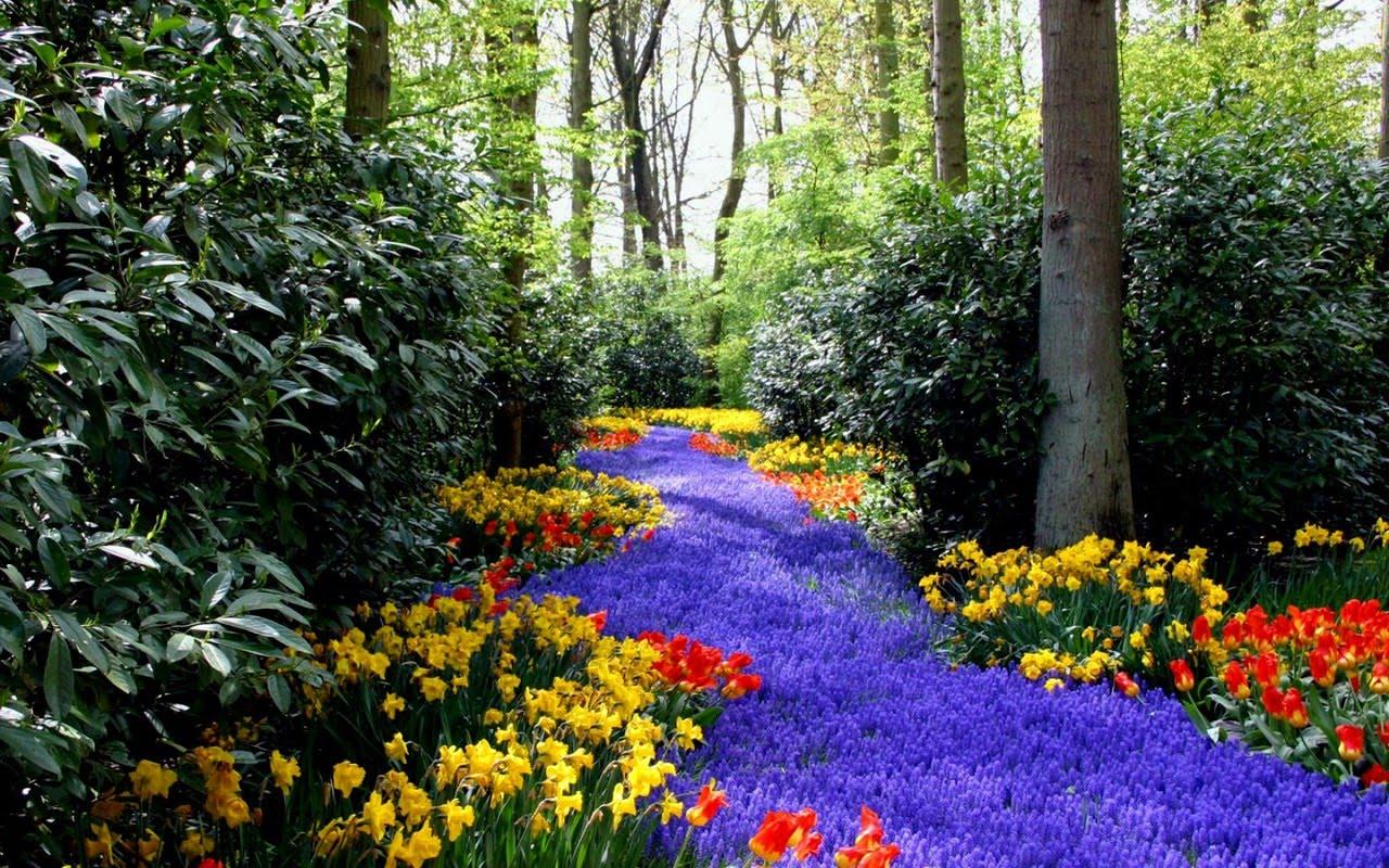 poze wallpaper hd,natural landscape,nature,garden,botanical garden,flower