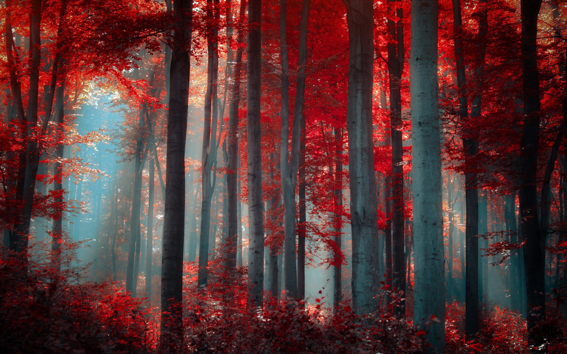 red nature wallpaper,red,forest,nature,tree,natural environment