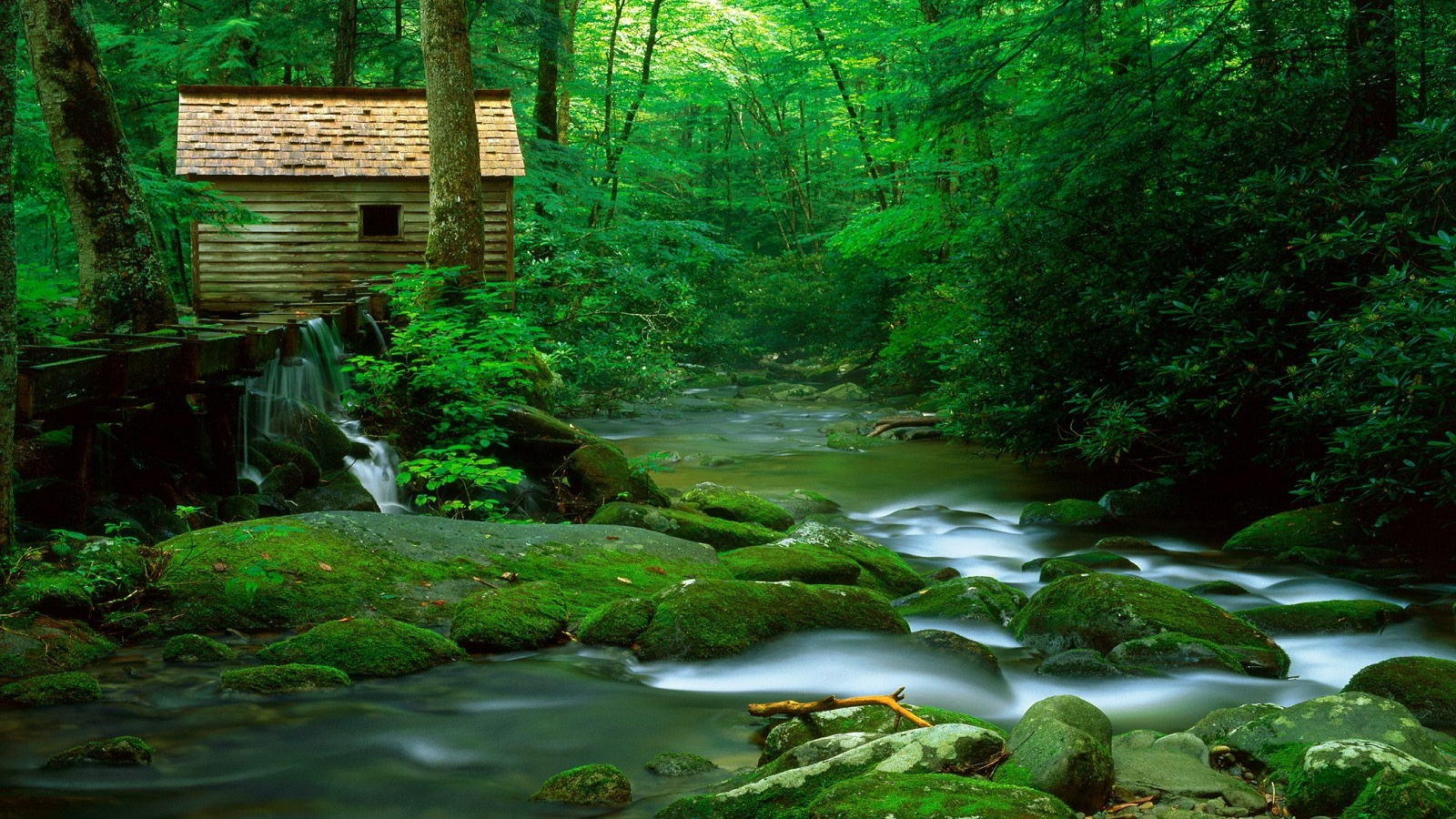 nature forest wallpaper,natural landscape,nature,body of water,stream,watercourse