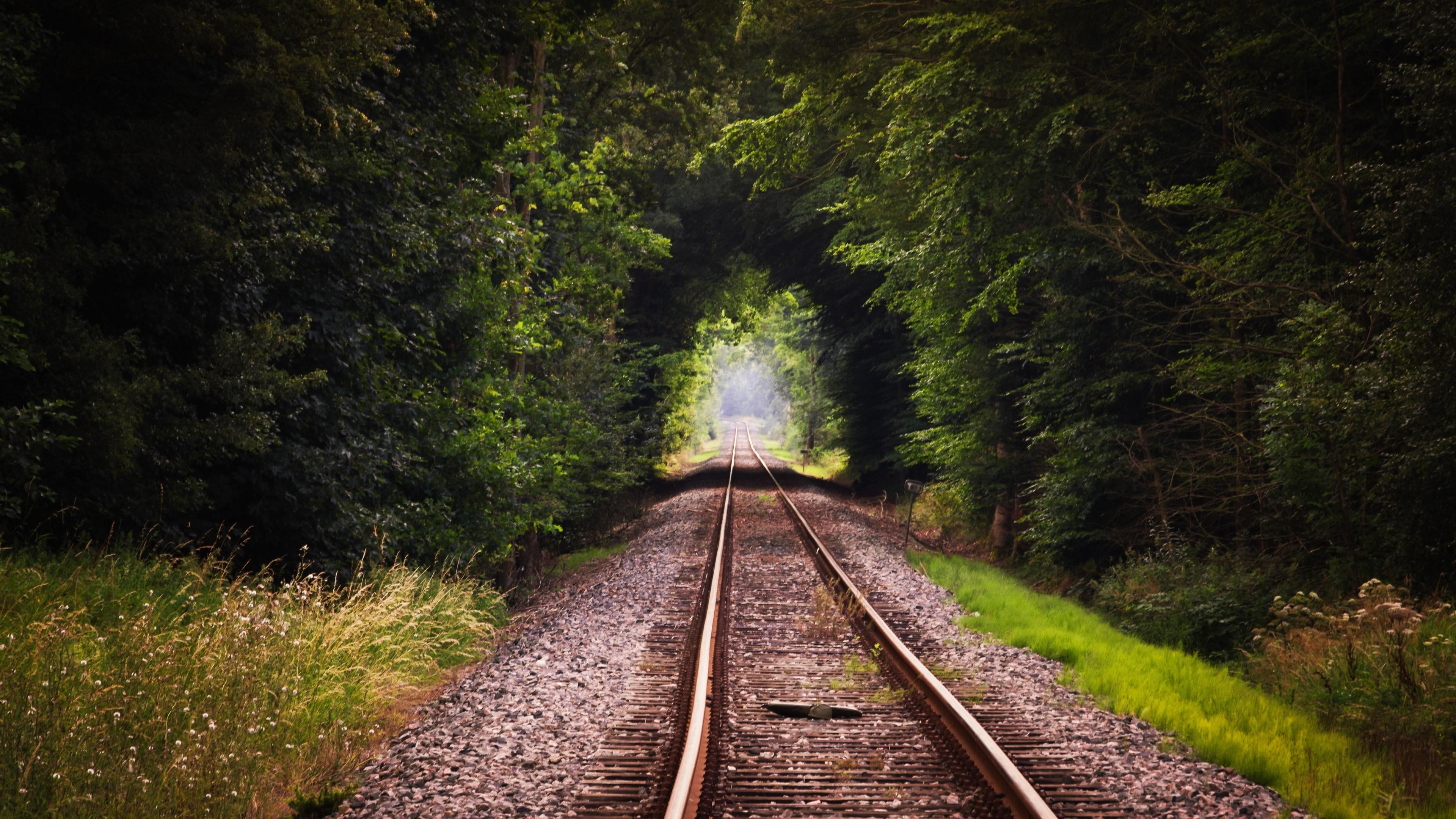 nature forest wallpaper,track,transport,nature,tree,natural landscape