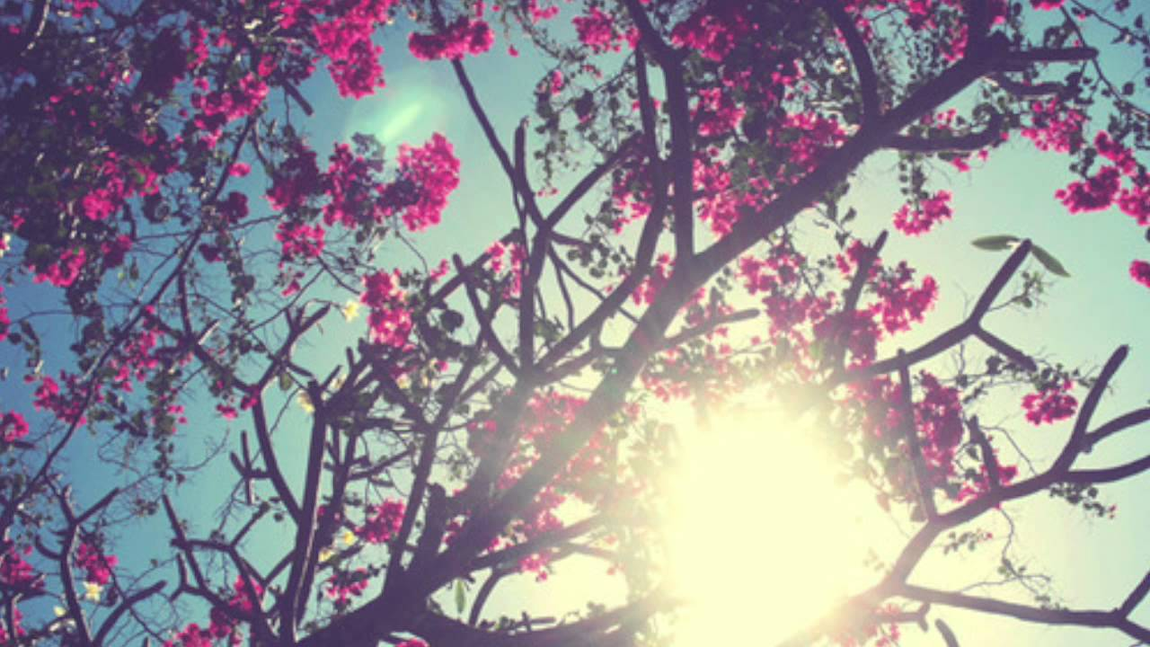 pretty wallpapers for ipad,branch,pink,nature,spring,tree
