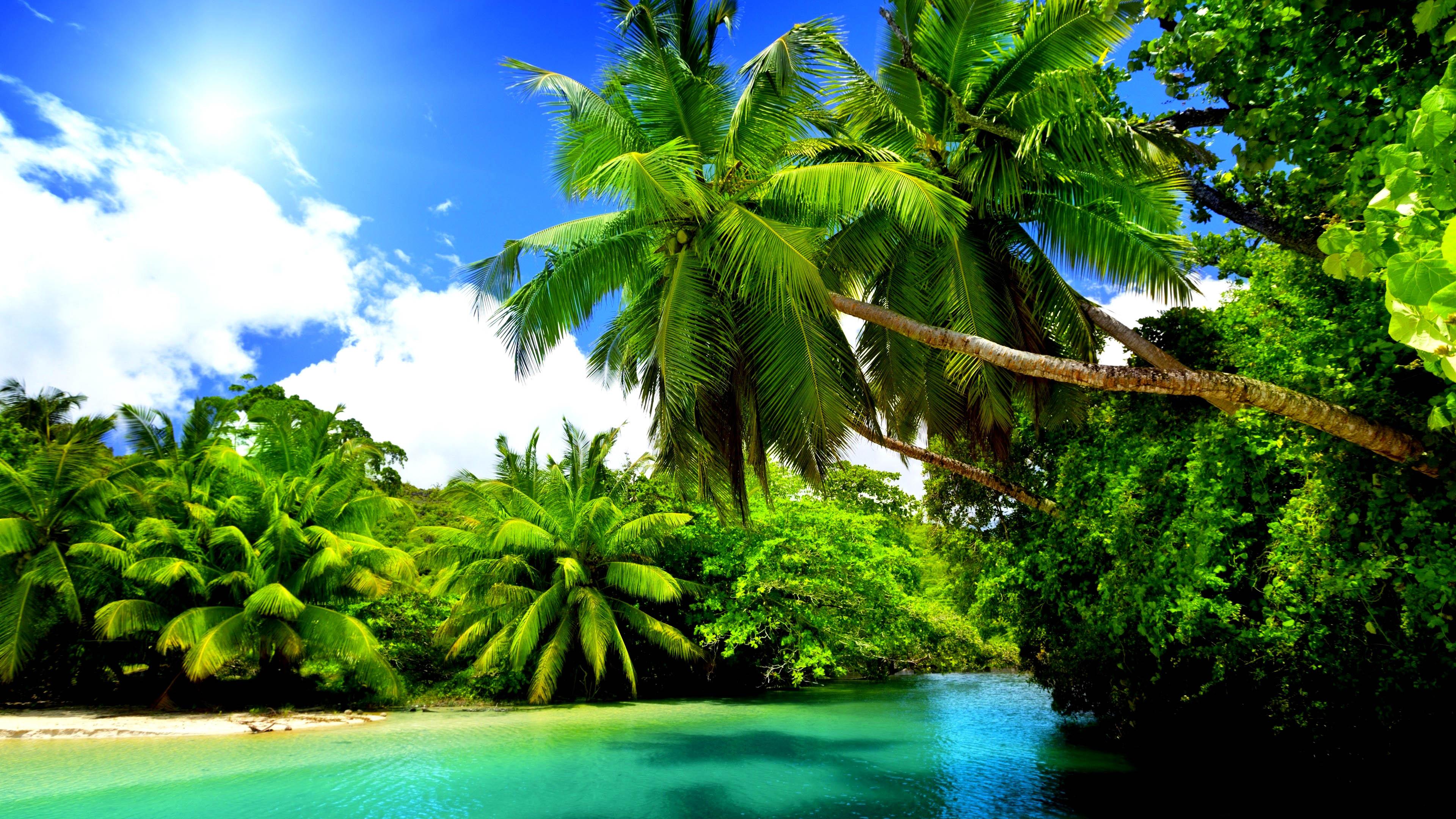 nature vert arbre ciel