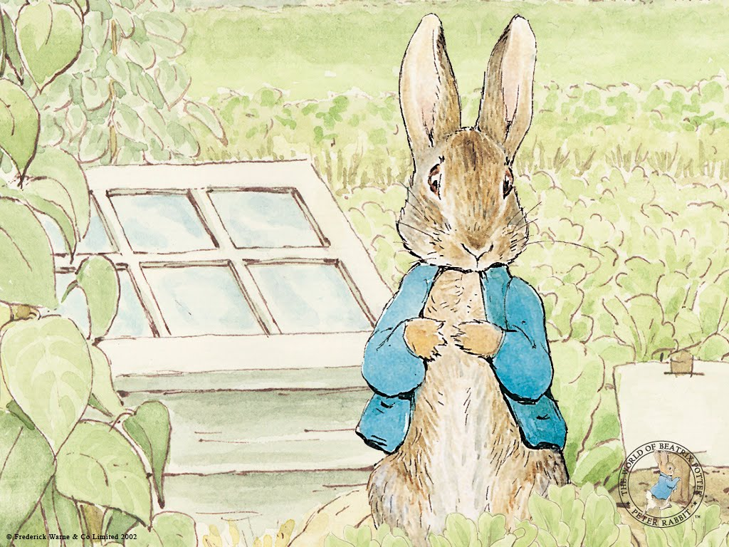 peter rabbit wallpaper,rabbit,mountain cottontail,hare,rabbits and hares,domestic rabbit
