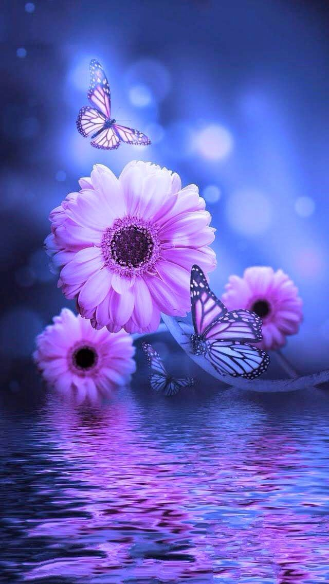 good morning good night wallpaper,violet,purple,nature,blue,butterfly