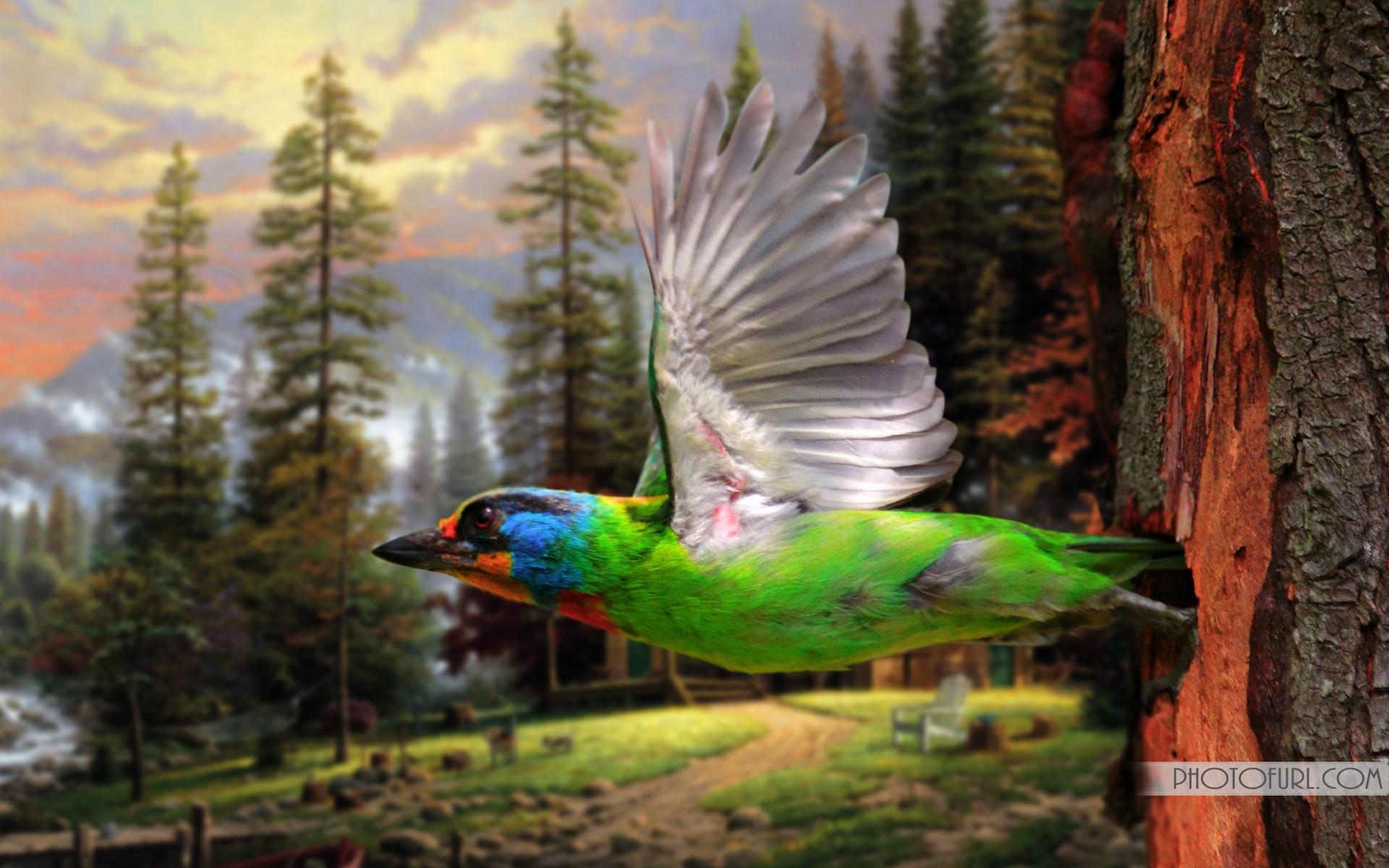 rare wallpaper,bird,vertebrate,beak,nature,organism