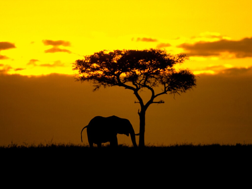 wallpaper south africa,sky,savanna,wildlife,tree,sunset