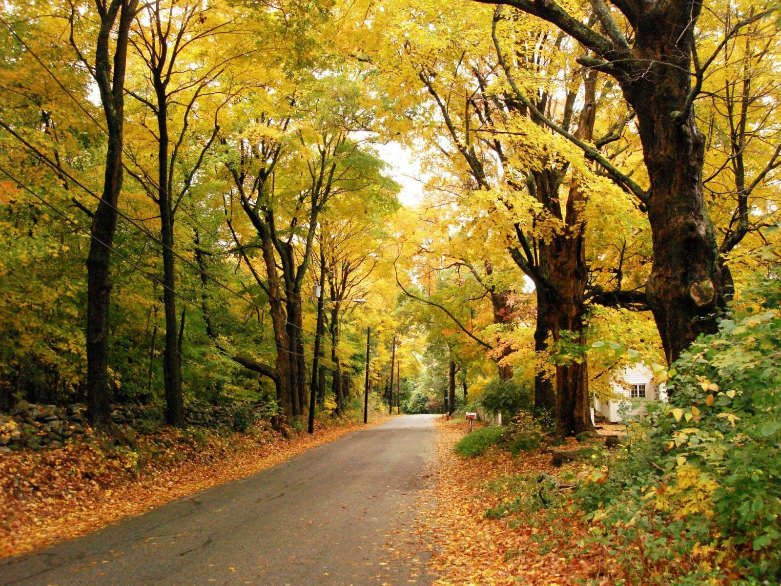 beautiful scenery wallpapers,tree,natural landscape,nature,deciduous,woodland