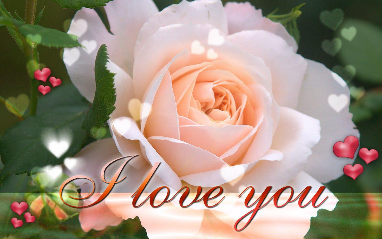 i love you wallpaper hd,flower,flowering plant,garden roses,rose,floribunda