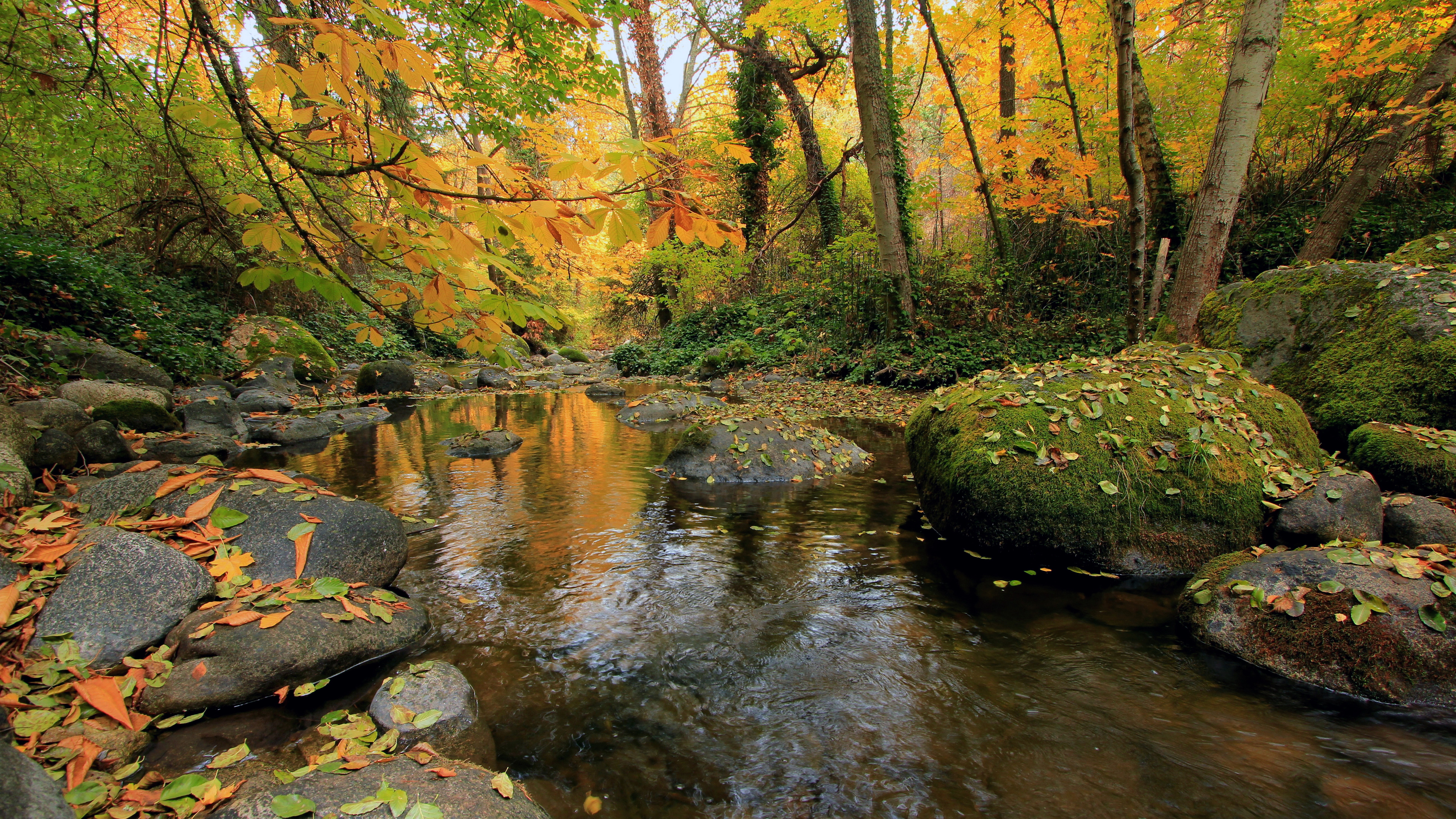 8k hd wallpapers,natural landscape,body of water,nature,stream,riparian zone