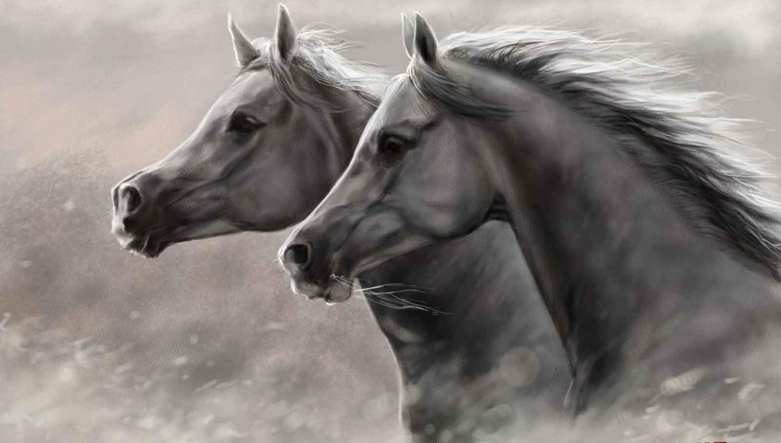 imagenes hd wallpaper,horse,vertebrate,mammal,mane,stallion