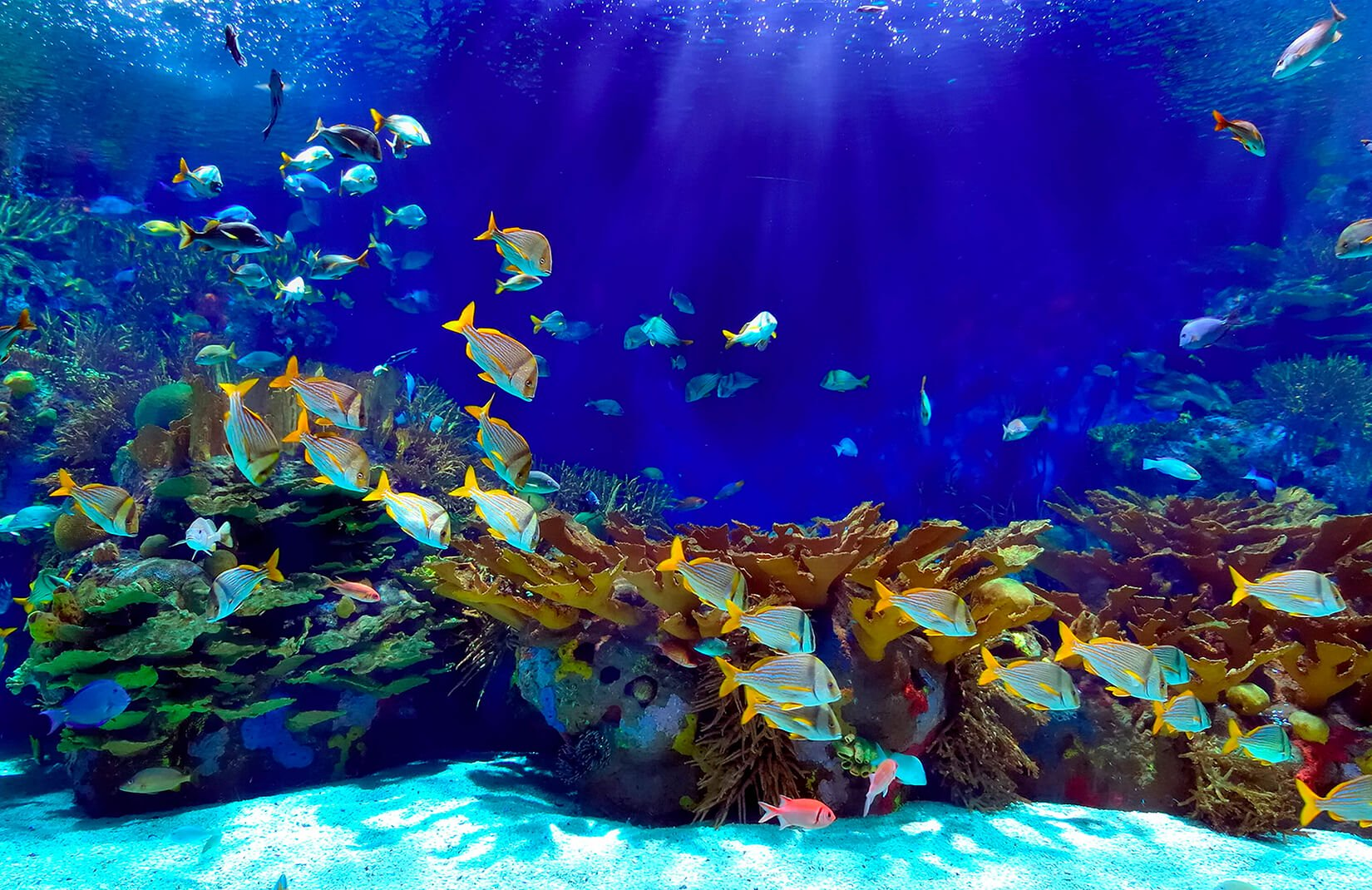 underwater wallpaper,marine biology,aquarium,water,underwater,fish