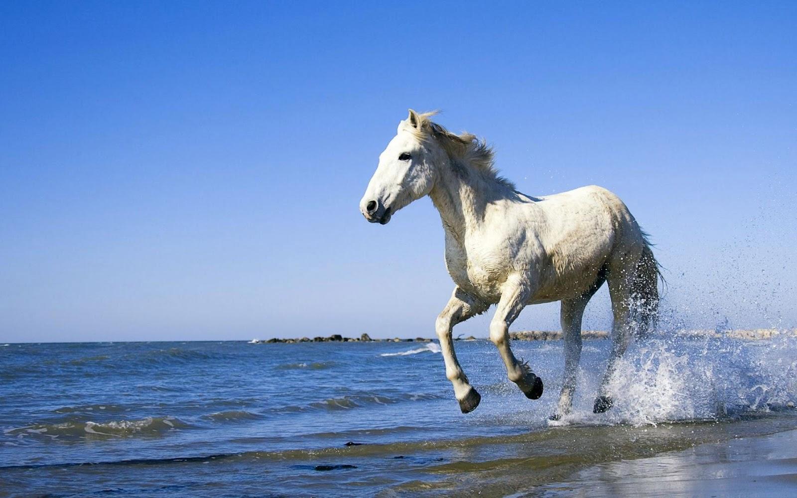 running horse wallpaper,horse,mammal,stallion,sky,mane