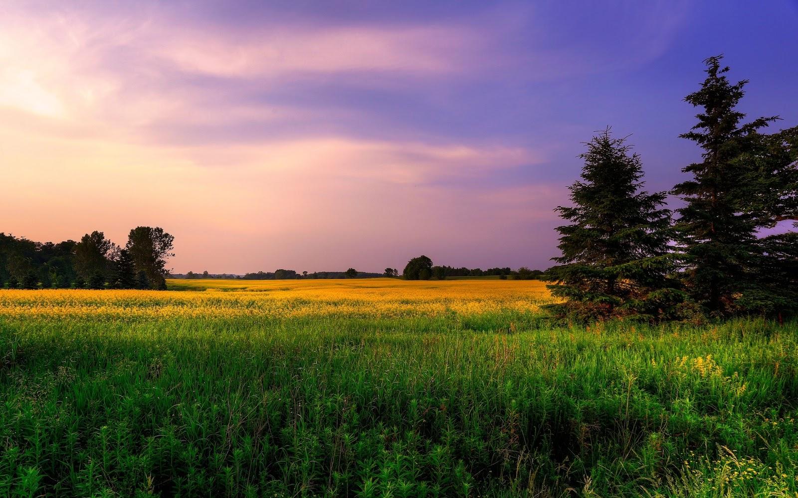 natural image hd wallpaper,sky,natural landscape,nature,field,grassland